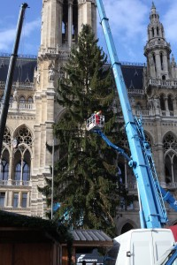 Weihnachtsbaum aus Niederösterreich ziert Wiener Rathausplatz