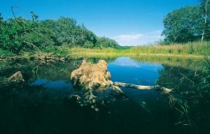 Forschungsabend für alle NaturfreundInnen im Nationalparkhaus in der Lobau