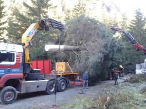 Der Weihnachtsbaum für Wien kommt aus Pfunds in Tirol. Am Samstag wurde die Fichte von den Facharbeitern der Agrargemeinschaft Pfunds gefällt und für den Transport nach Wien verladen.